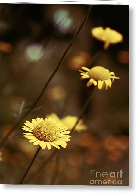 Aimelle Photography Greeting Cards - Momentum 03a Greeting Card by Variance Collections