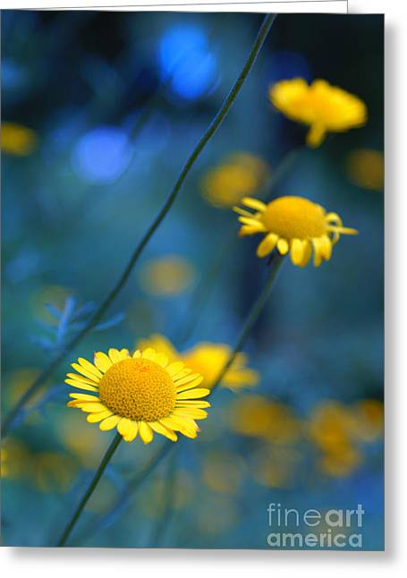 Daisy Greeting Cards - Momentum 04a Greeting Card by Variance Collections