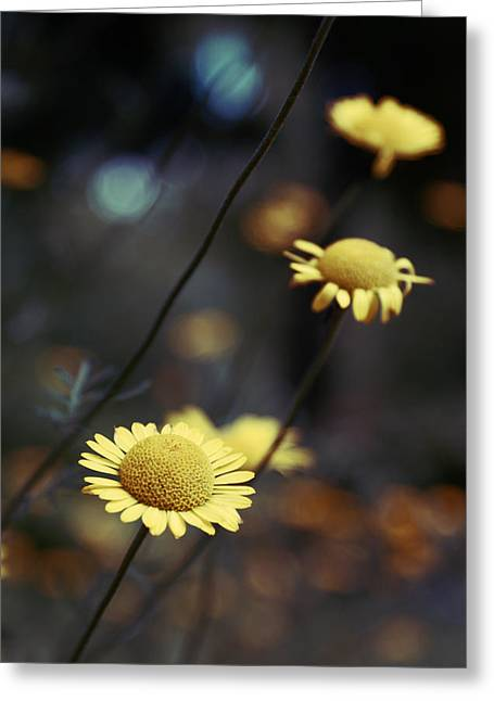 Flowers Photography Greeting Cards - Momentum Greeting Card by Aimelle