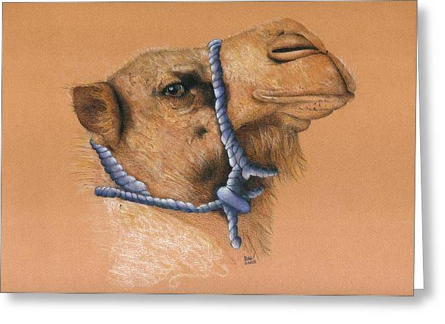 Rescue Drawings Greeting Cards - Mona The Rescue Camel Greeting Card by Ann Hamilton