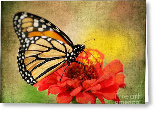 Invertebrates Greeting Cards - Monarch Butterfly Greeting Card by Darren Fisher