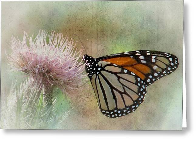Danaus Plexippus Greeting Cards - Monarch Butterfly Greeting Card by Rudy Umans