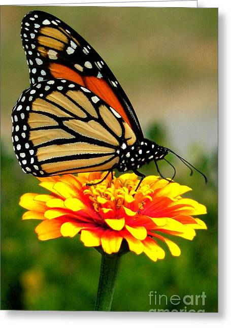 Close Up Floral Greeting Cards - Monarch Greeting Card by Jeff Breiman