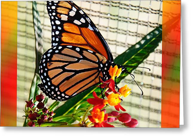 Feeding Mixed Media Greeting Cards - Monarch Rainbow Greeting Card by Andee Design