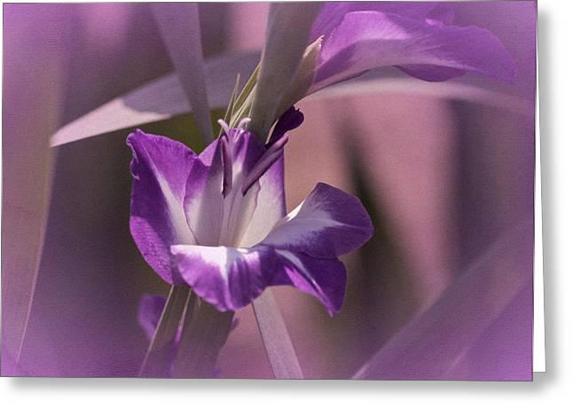 Purple Gladiolas Greeting Cards - Mondays Gladiola No. 2 Greeting Card by Richard Cummings
