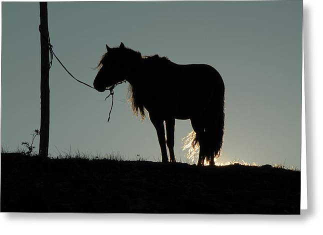 Silhouettes Of Horses Greeting Cards - Mongolian Horse Greeting Card by Donna Caplinger