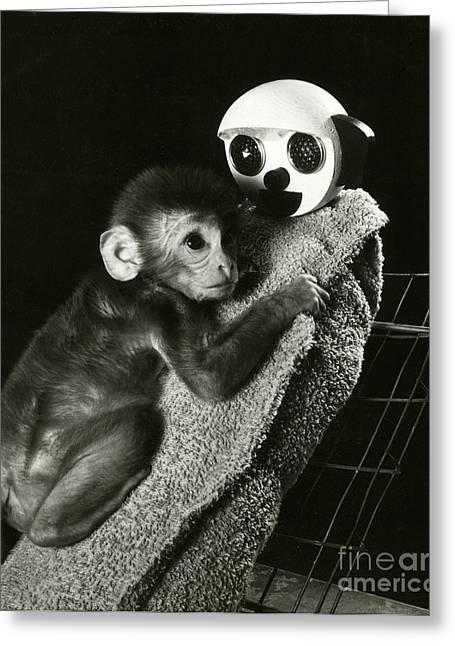 Psychology Photographs Greeting Cards - Monkey Research Greeting Card by Photo Researchers, Inc.