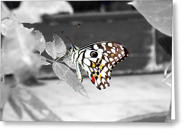 Serene Greeting Cards - Monochromatic butterfly Greeting Card by Sumit Mehndiratta