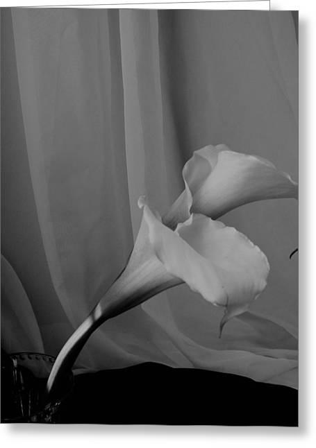 Lynnette Johns Greeting Cards - Monochrome Calla Lilies Greeting Card by Lynnette Johns