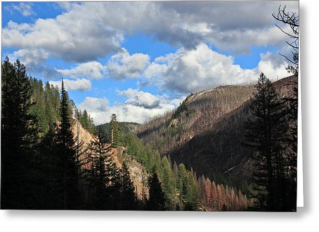 Snow-covered Landscape Greeting Cards - Montana Country Greeting Card by Athena Mckinzie