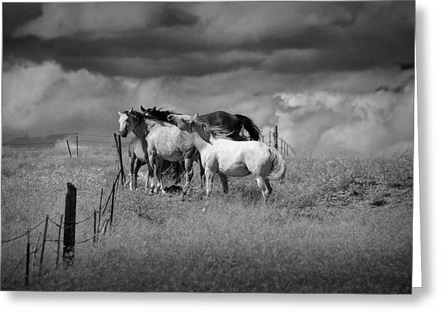 Equestrian Prints Photographs Greeting Cards - Montana Horses in a Pasture Greeting Card by Randall Nyhof