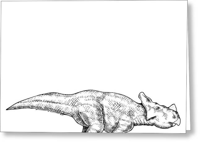 Ink Drawing Greeting Cards - Montanoceratops Greeting Card by Karl Addison
