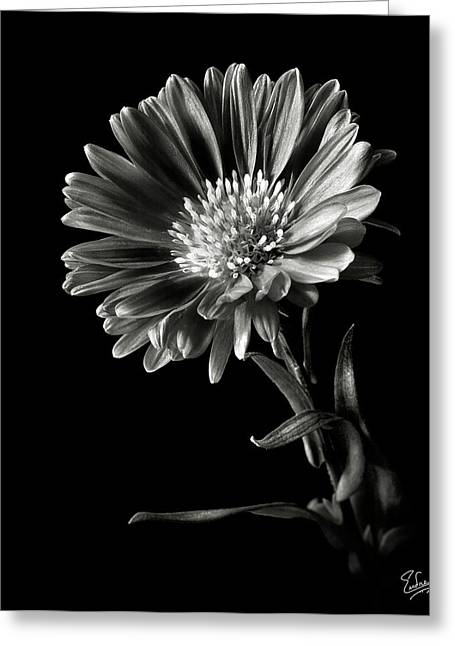Flower Photos Greeting Cards - Montecasino in Black and White Greeting Card by Endre Balogh