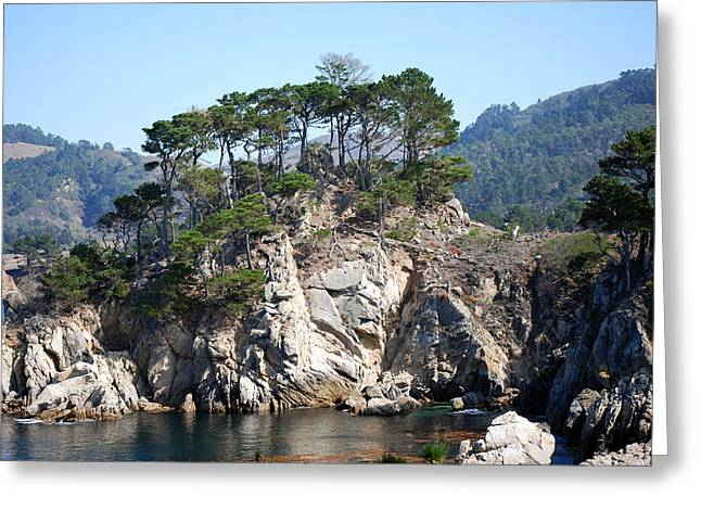 Point Lobos Greeting Cards - Monterey Cypres  Greeting Card by Harvey Barrison