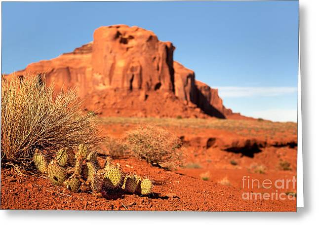Native Stone Greeting Cards - Monument Valley Cactus Greeting Card by Jane Rix