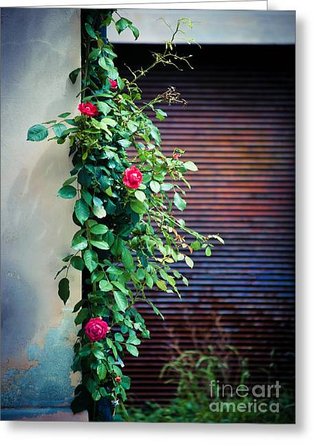 Moody Roses Greeting Card by Silvia Ganora