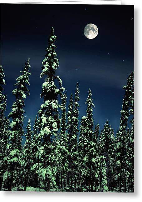 Snowy Night Night Greeting Cards - Moon And Trees, Teslin, Yukon Greeting Card by Robert Postma