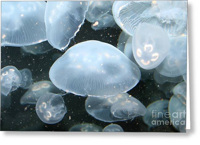 Moon Jelly Fish Greeting Cards - Moon Jelly Greeting Card by Ted Kinsman