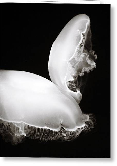 Moon Jellyfish Greeting Cards - Moon Jellyfish Touching Greeting Card by Marilyn Hunt