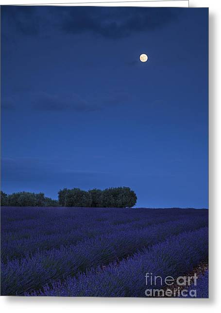 Moon Over Lavender Greeting Card by Brian Jannsen