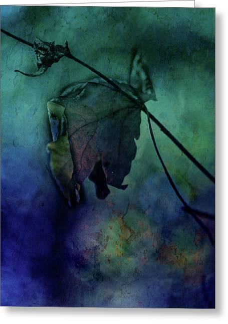Tree Art Print Mixed Media Greeting Cards - Moonlight Serenade Greeting Card by Bonnie Bruno