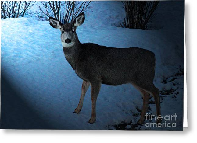 Does. Winter Greeting Cards - Moonlight Sonata Greeting Card by Al Bourassa