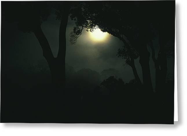 Brassey Greeting Cards - Moonlight Through Fog And Silhouetted Greeting Card by Tim Laman