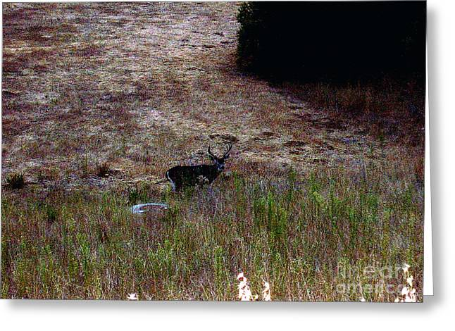 Moonlit Buck Greeting Card by The Kepharts