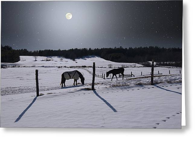Grazing Snow Greeting Cards - Moonlit Horses Greeting Card by Larry Landolfi