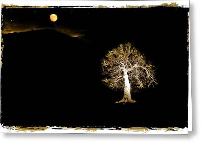 Moonlit Night Greeting Cards - Moonlit Tree Greeting Card by Mal Bray