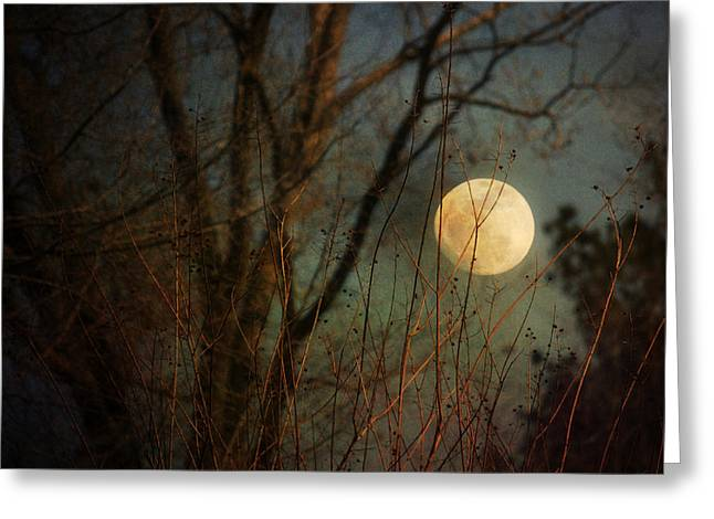 Moonrise Greeting Card by Jai Johnson