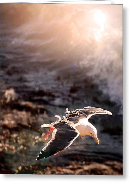 Cambria Greeting Cards - Moonstone Beach Seagull Greeting Card by Michael Rock