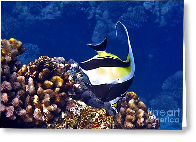 Reef Fish Greeting Cards - Moorish Idol on Reef Greeting Card by Bette Phelan