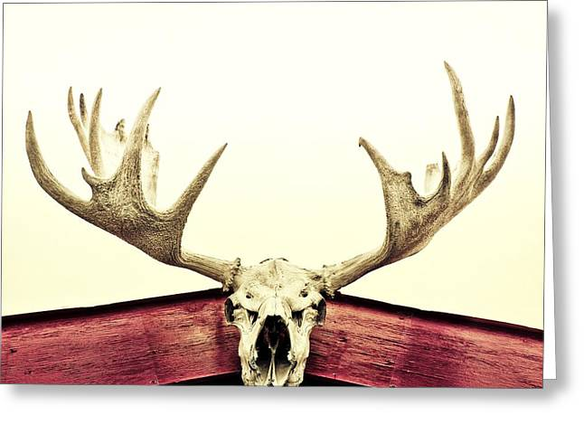 Crimson Greeting Cards - Moose Trophy Greeting Card by Priska Wettstein