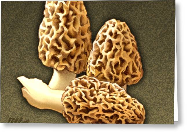 Toadstools Greeting Cards - Morel Mushrooms Greeting Card by Marshall Robinson