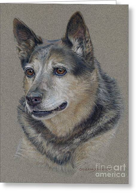 Queensland Blue Heeler Greeting Cards - Morgan Greeting Card by Gloria Johnson