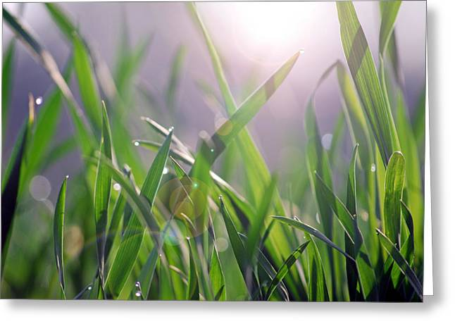 Sunlight Pastels Greeting Cards - Mornin Grass Greeting Card by Steavon Horne