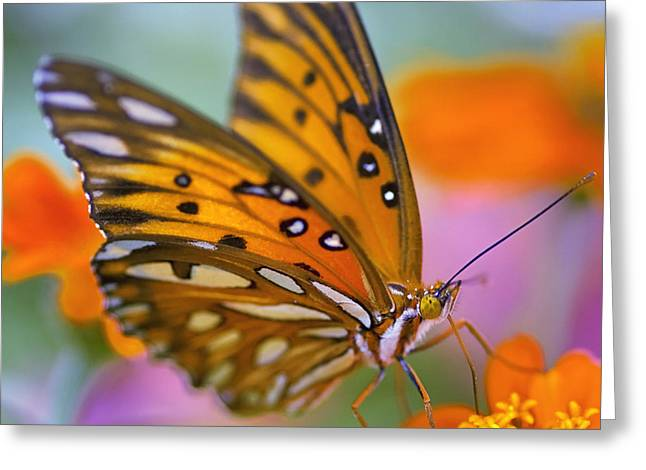 Blue Flowers Greeting Cards - Morning Butterfly Greeting Card by Joel Olives