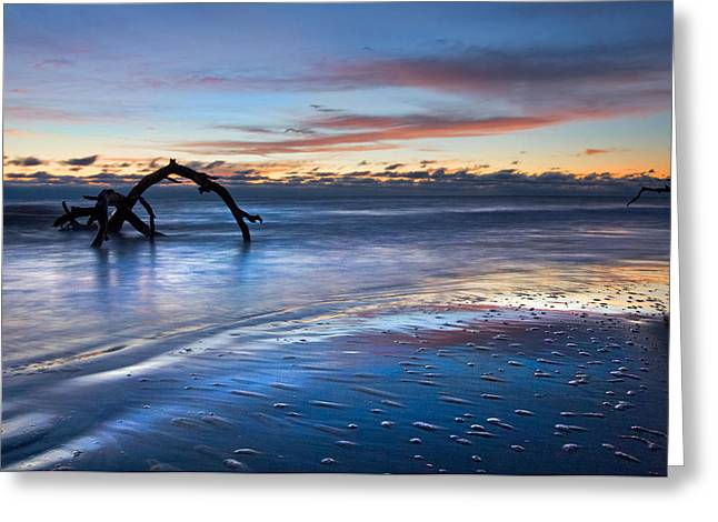 Tidal Photographs Greeting Cards - Morning Calm at Driftwood Beach Greeting Card by Debra and Dave Vanderlaan