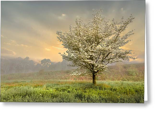 Field. Cloud Greeting Cards - Morning Celebration Greeting Card by Debra and Dave Vanderlaan