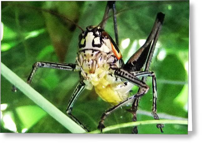 Greek Insects Greeting Cards - Morning Greeting Card by Eric Kempson
