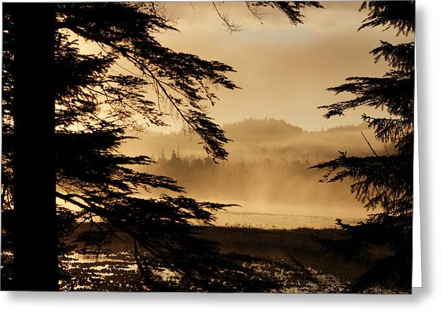 Tongass Greeting Cards - Morning Fog Rises Over Control Lake Greeting Card by Melissa Farlow