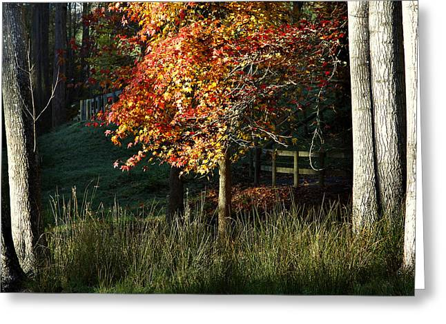 Autumn Photographs Greeting Cards - Morning forest Greeting Card by Les Cunliffe