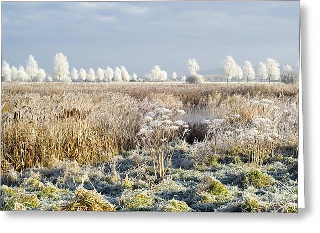 Willow Lake Greeting Cards - Morning Frost Greeting Card by Duncan Shaw