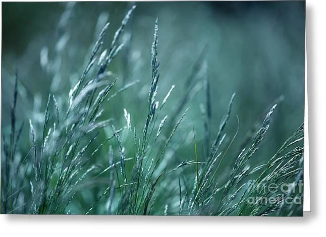 Blueish Greeting Cards - Morning grass Greeting Card by Gabriela Insuratelu