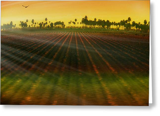 Sun Rays Digital Art Greeting Cards - Morning has broken Greeting Card by Holly Kempe
