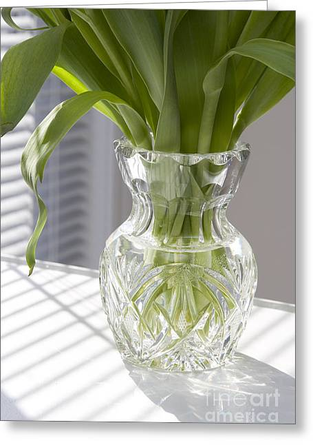 Venetian Blinds Greeting Cards - Morning Greeting Card by Igor Kislev