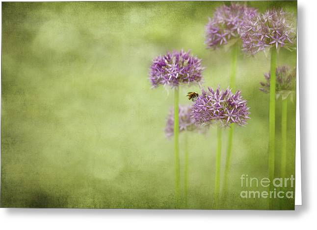 Morning in the Garden Greeting Card by Reflective Moment Photography And Digital Art Images