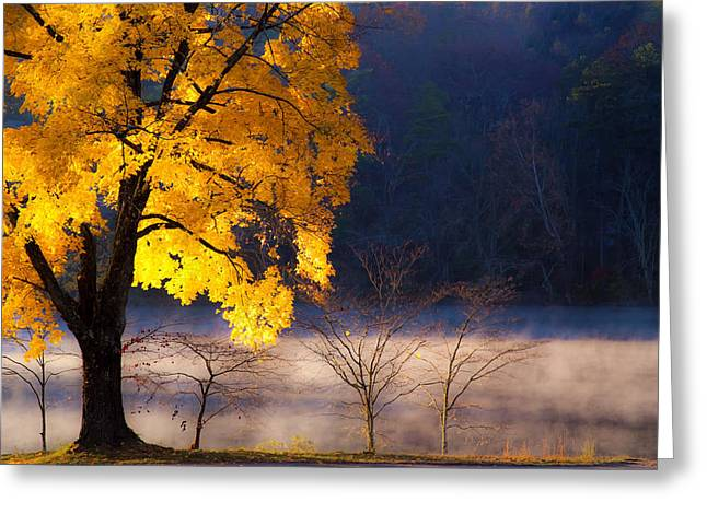 Beaver Lake Photographs Greeting Cards - Morning Maple ll Greeting Card by Rob Travis