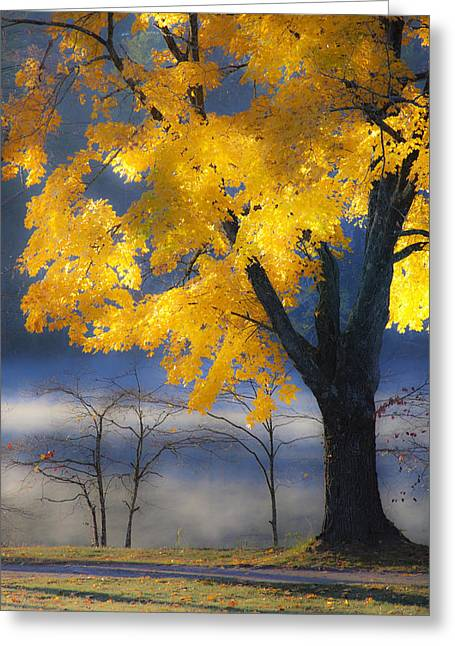 Autumn Photographs Greeting Cards - Morning Maple Greeting Card by Rob Travis
